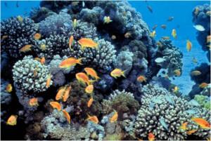 """שונית האלמוגים באילת, באדיבות ד""""ר דוד דרום"""