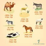 איור חיות: חמור, צבי, גמל, כבש, סוס, תיש ופרה