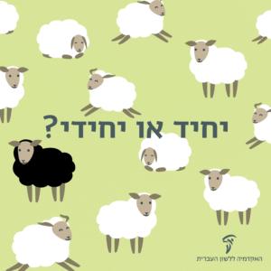 כבשים שחורות וכבשה לבנה והכיתוב: יחיד או יחידי?