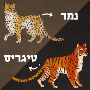 איור של נמר ויטיגריס עם כיתוב השמות וחיצים שמוליכים לבעלי החיים