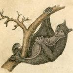 איור של עטלף