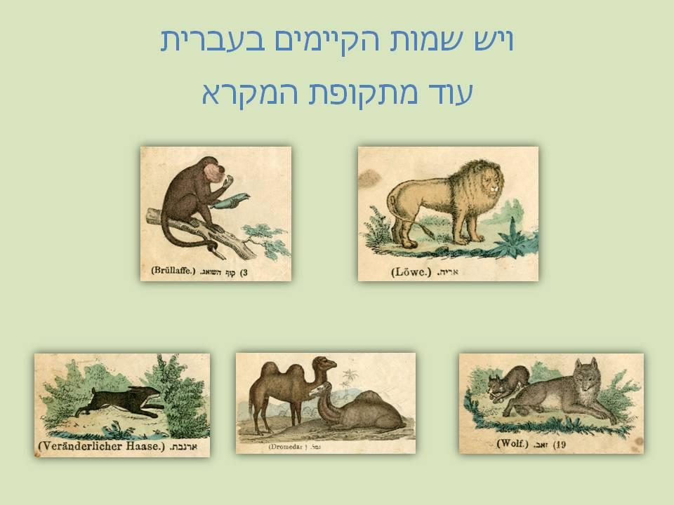 צילום מצגת שמות בעלי חיים מתקופת המקרא
