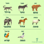 איור של בעלי החיים: דוב, חמור, חתול, כבשה, סוס, פיל, יונה ותרנגול והכיתובים בהתאמה: נוהם, נוער, מייללף פועה, צוהל, מחצצר, הומה וקורא