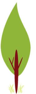 איור של עץ ברוש ירוק