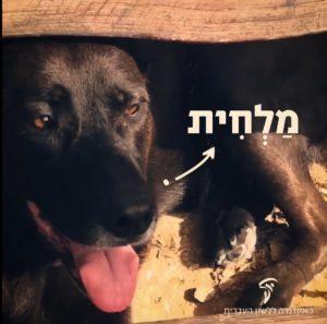 צילום של כלב משרבב לשון והכיתוב: מַלְחִית