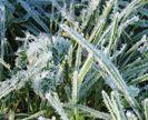 כְּפוֹר - frost