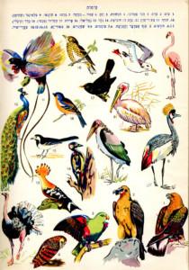 צילום של עמוד מתוך מילון ובו איורים של ציפורים ושמותיהן
