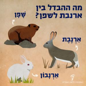 איור ארנבת, שפן וארנבון עם כיתוב מה ההבדל בין ארנבת לשפן