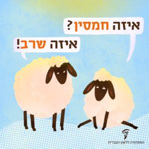 איור של שני כבשים – האחד שואל: איזה חמסין? השני עונה: איזה שרב!