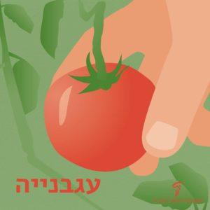 איור של יד אוחזת בעגבנייה וכיתוב עגבנייה